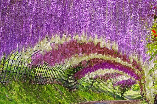 tweebuzz-15-merveilles-naturelles-qui-semblent-trop-belles-pour-exister-3