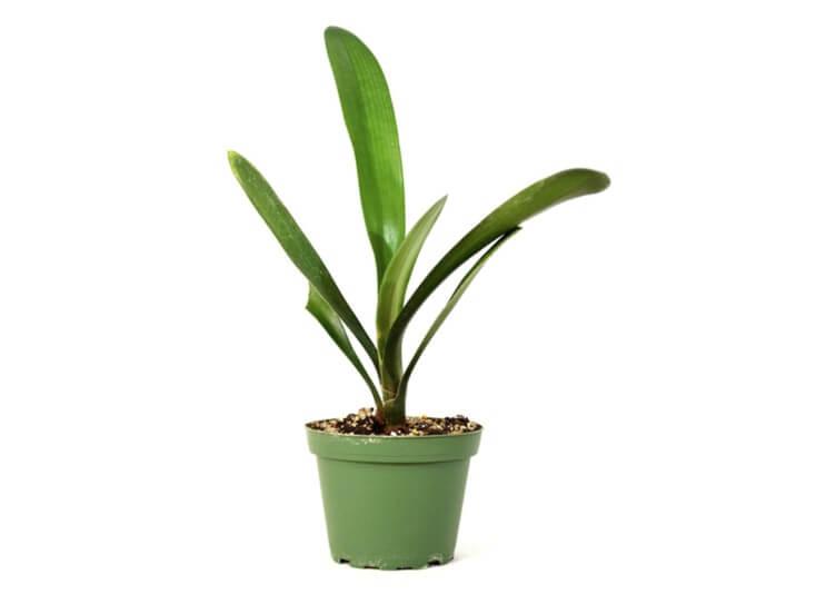 گیاهان آپارتمانی - www.howcanu.com